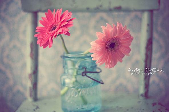 Pink Gerberas Mason Jars