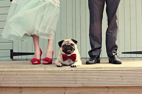 Dog Wedding Decor